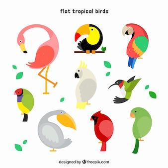 Cool conjunto de pássaros tropicais