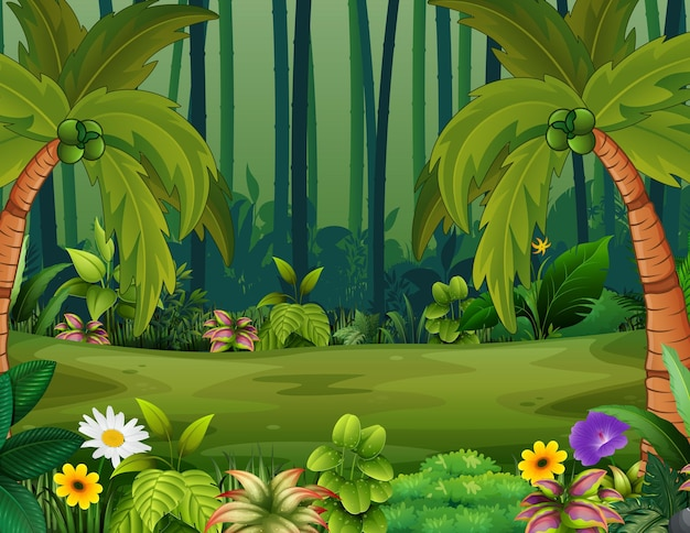 Coqueiros no fundo da floresta
