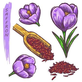 Cor de açafrão esboço de ervas e plantas de especiarias
