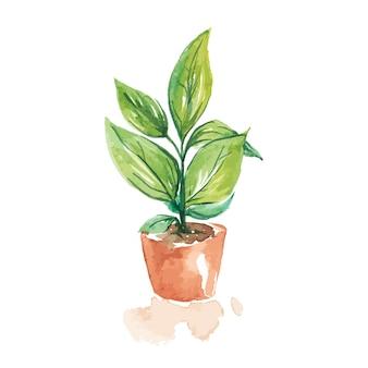 Cor de água de vasos de plantas em branco.