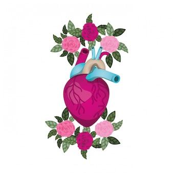 Coração, com, veias, e, flores, isolado, ícone Vetor Premium