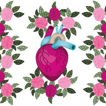 Coração com veias e rosas ícone isolado