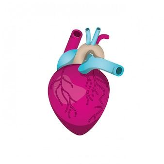 Coração, com, veias, isolado, ícone Vetor Premium