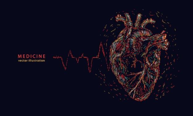 Coração humano anatômico e linha de pulso.
