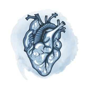 Coração humano desenhado em detalhes sobre um fundo de loop em aquarela.