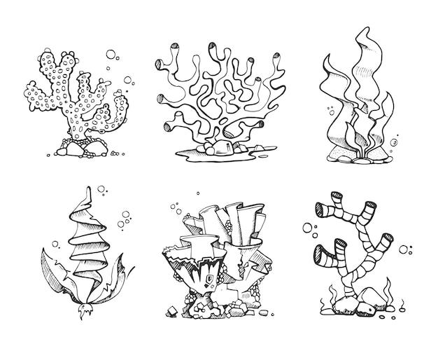 Corais e algas vintage na mão desenhada