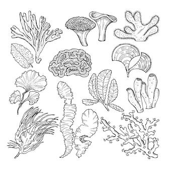 Corais e plantas subaquáticas no oceano ou aquário. fotos de mão desenhada de vetor