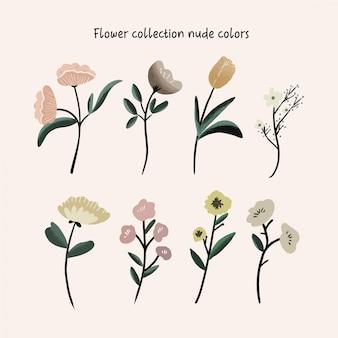 Cores nuas da coleção da flor