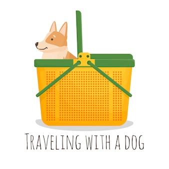 Corgi fica em uma transportadora. cesta de plástico para animais de estimação