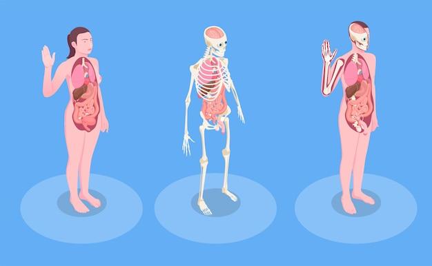 Corpos humanos masculinos e femininos e órgãos internos 3d isométrico