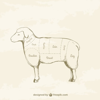 Cortes de cordeiro desenho
