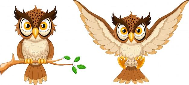 Coruja de desenhos animados, sentado no galho de árvore e coruja voadora