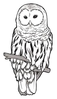 Coruja. esboço, retrato desenhado, gráfico de uma coruja em um fundo branco.
