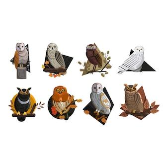 Coruja selvagem animais ícones coloridos modelo vector