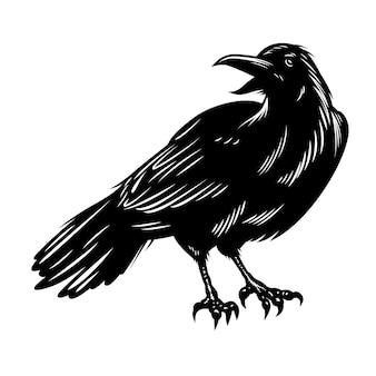 Corvo preto isolado no branco