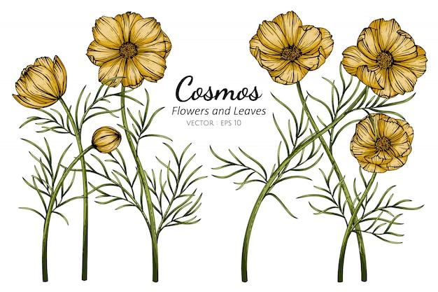 Cosmos amarelo flor e folha desenho ilustração