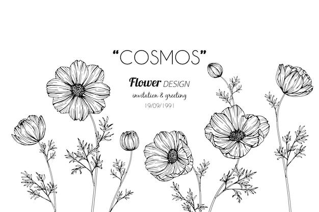 Cosmos flor desenho ilustração