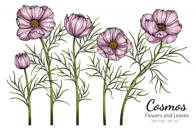Cosmos rosa flor e folha desenho ilustração