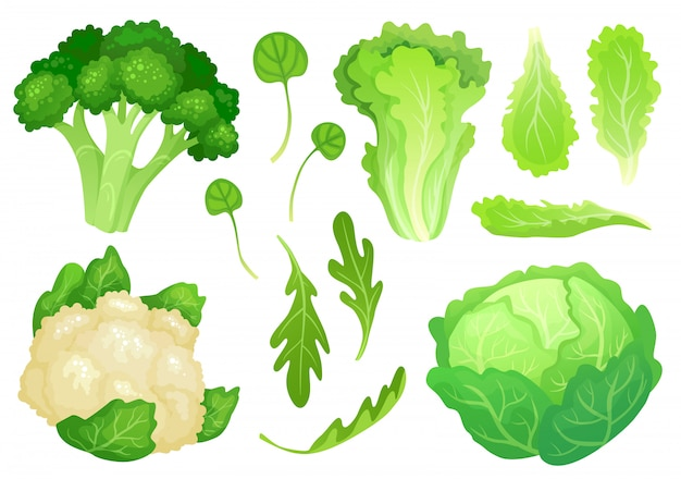 Couves de desenhos animados. folhas de alface fresca, salada de dieta vegetariana e couve verde jardim saudável. ilustração de cabeça de couve-flor