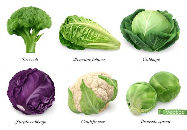 Couves e alface, objetos de comida realista de vegetais de folhas