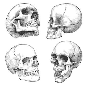 Crânio desenhado de mão. esboce crânios anatômicos em diferentes ângulos, tatuagem gótica. conjunto de vetores de gravura de halloween de cabeça morta de esqueleto humano. rosto mau e assustador com dentes abertos e fechados