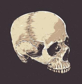Crânio desenhado mão em estilo vintage