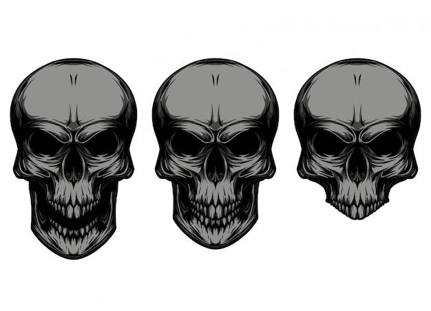 Crânio em diferentes tipos