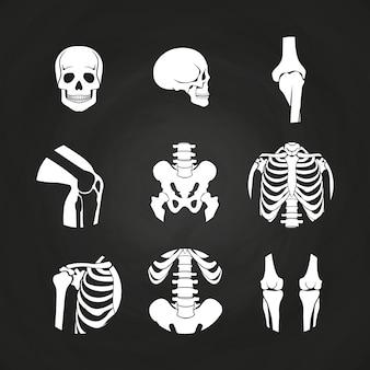 Crânio humano branco e ossos
