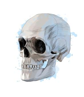 Crânio humano de um toque de aquarela, desenho colorido, realista.