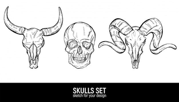 Crânio humano e caveiras animais esboçar conjunto.