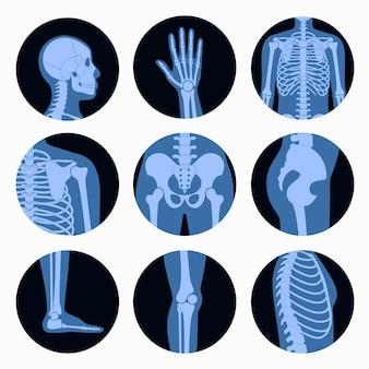 Crânio humano e ossos em visualização de raio-x