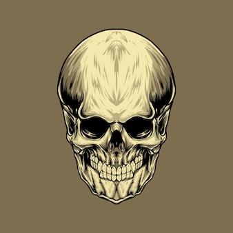 Crânio humano naturalista com ilustração vetorial de dentes