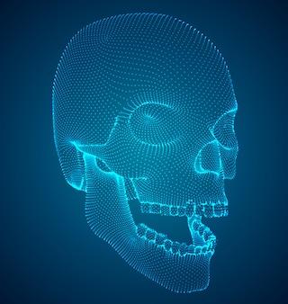Crânio humano Vetor Premium