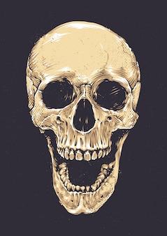 Crânio realista desenhado a mão