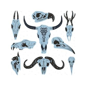 Crânios com ossos de cabeça de animais de cabra ou ovelha