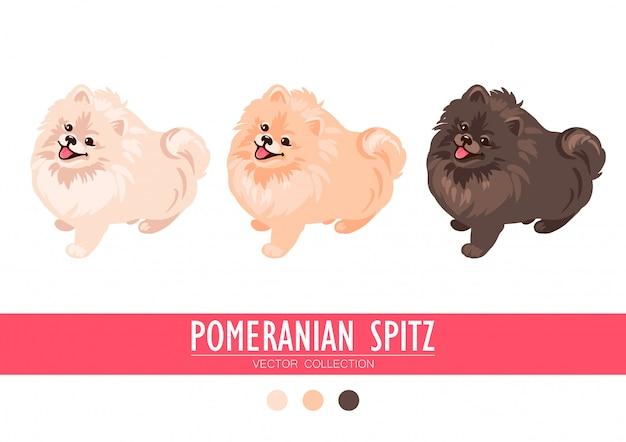 Creme, laranja e obscuridade do spitz de pomeranian isolados no fundo branco. filhotes de cachorro bonitos de poms. spitz alemão pequeno. cachorrinhos.