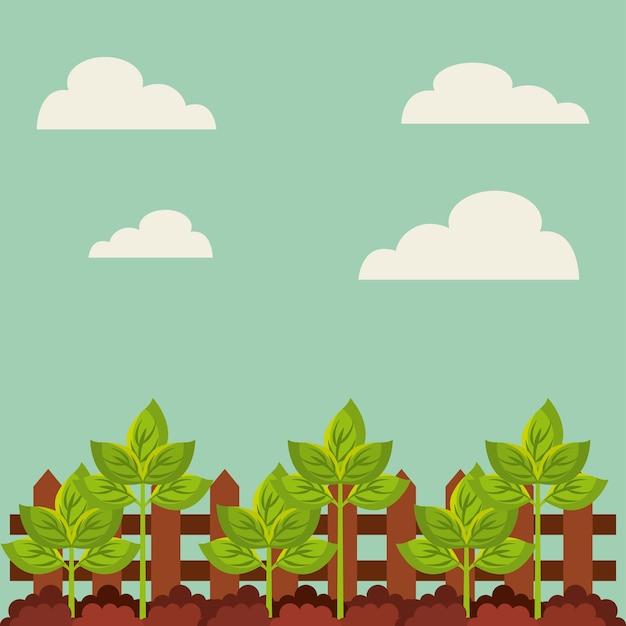 Crescimento de planta verde