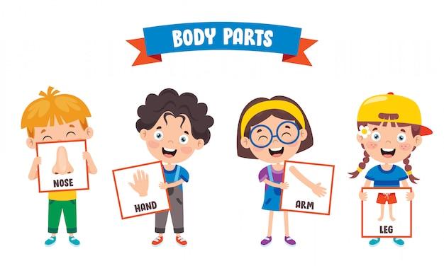 Criança engraçada mostrando partes do corpo humano