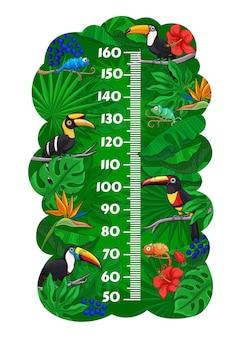 Crianças gráfico de altura de pássaros tucanos e camaleões na selva, medida de crescimento de folhas tropicais. medidor de adesivo de parede de vetor para medição de altura de crianças com personagens engraçados de desenhos animados na floresta tropical e escala