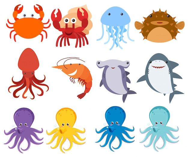 Criaturas do mar no backgriund branco
