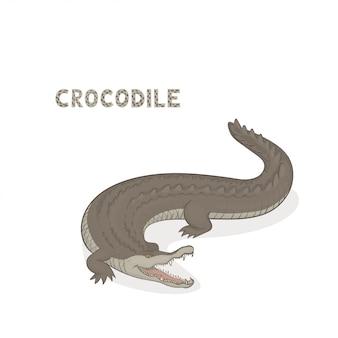 Crocodilo de desenhos animados com mandíbulas abertas isolado no branco