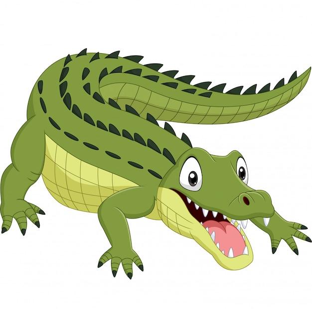 Crocodilo de desenhos animados, isolado no fundo branco
