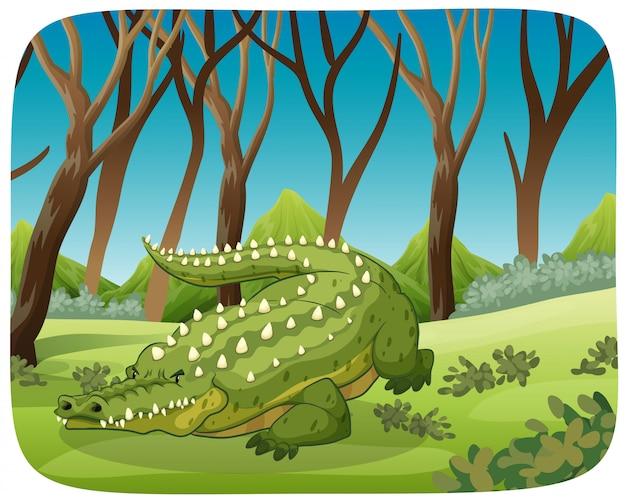Crocodilo na cena da floresta