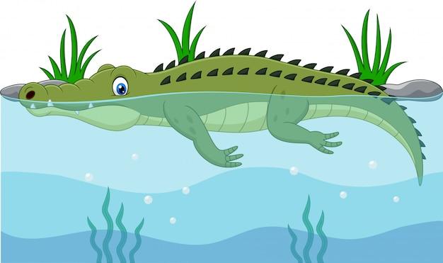 Crocodilo verde dos desenhos animados, nadar no rio