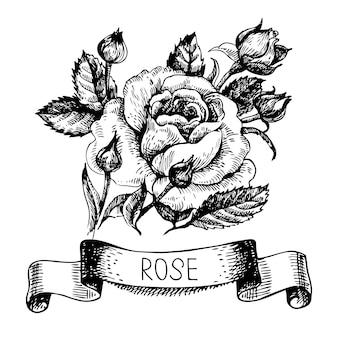 Croqui de banner rosa floral com fita. ilustração desenhada à mão