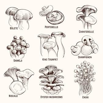 Croqui de cogumelos. vintage comestível cogumelo comida saudável outono ilustração vetorial gravada