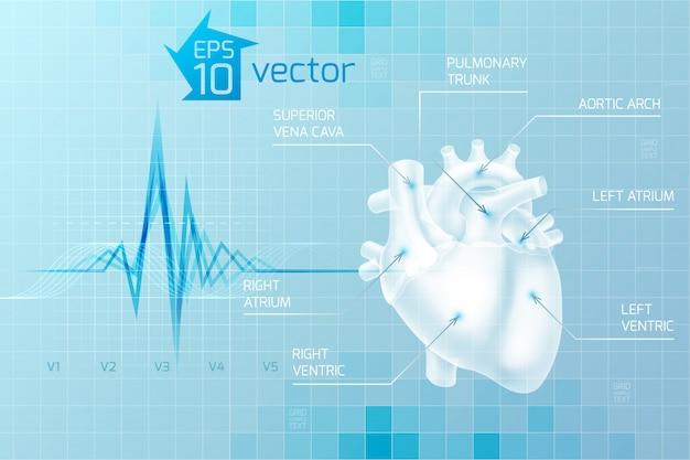Cuidados médicos com anatomia do coração humano em azul claro no estilo digital