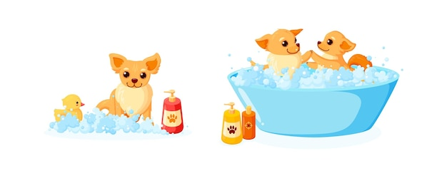 Cuidando do cão em uma banheira com pato de borracha e shampoo conjunto com chihuahua em espuma de sabão