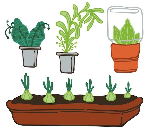 Cuidar de plantas e flora em vasos, ícones isolados de folhagem decorativa para casa ou escritório. agricultura orgânica, estufa ou laranjal. jardinagem e cultivo de flores, vetor em estilo simples