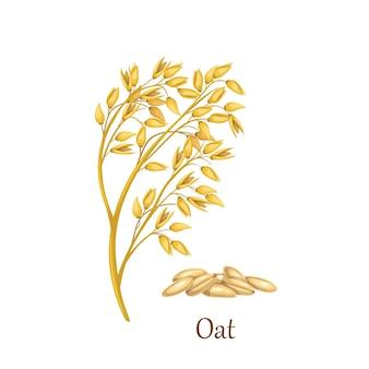 Culturas de cereais de grama de aveia, planta agrícola